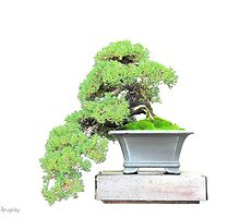 Bonsai 5.....Longwood Gardens by DaveHrusecky