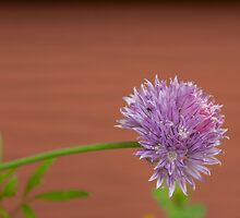 The Chive's Flower by Aler