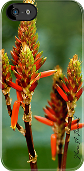 Western Coral Bean - - Cards, iPhone & iPad Cases by Maria A. Barnowl