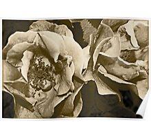 Antique Floral 6 Poster