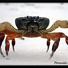 Crab Surin Islands , Thailand by Jonathan  Jarman