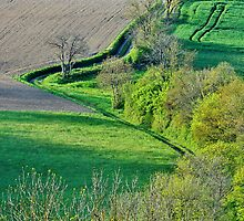 Springtime on the french countryside by Patrick Morand