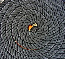 Coiled by John Trent