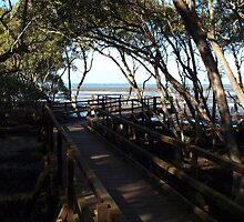 Wynnum North Mangrove Boardwalk by Wayne  Nixon