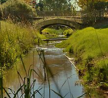 Bird Sanctuary, Bayswater, Western Australia #3 by Elaine Teague