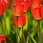 Flower bed of Tulips by Mark  Spowart