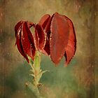 Rose Leaves by Elaine Teague