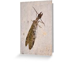 Gigantic dobson fly Greeting Card