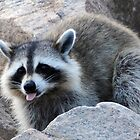"""ROCKY RACCOON' by Unelanvhi"