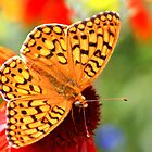 Fritillary by Arla M. Ruggles