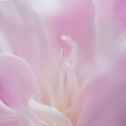 Peony Series-II by Angela King-Jones