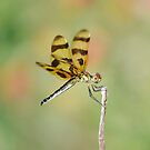 Halloween Pennant by Kate Farkas