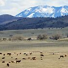 Cattle Country by © Betty E Duncan ~ Blue Mountain Blessings Photography