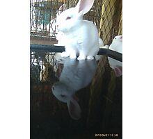 Cool bunny wade-N Pool Photographic Print