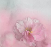 Pink Blossom by AnnieSnel