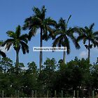 Pensive Palms by Michiale