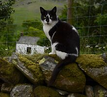 lake district cat by joak