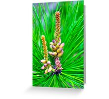 Beauty in the Pines Greeting Card