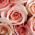 Pink Roses are for Romance by Heather  Hess
