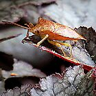 Shield Bug On Amethyst Myst Heuchera by Jean Gregory  Evans