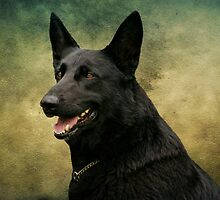 Storm - German Shepherd Dog by Sandy Keeton