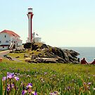 Peaceful day at Cape Forchu by Debbie  Roberts