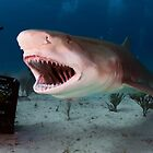 Shark! by Greg Amptman