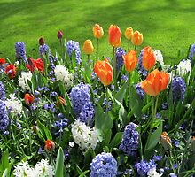 Orange Tulips and Blue Hyacinths - Keukenhof Gardens by MidnightMelody