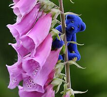 Blue Bear climbs the Foxgloves by Kerry McQuaid
