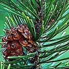 Pine cone Among the Green by Tori Snow