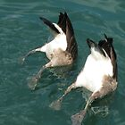 Synchronized Swimming  by Kelly Morris