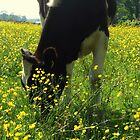 Between The Buttercups by ienemien