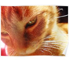 holography cat Poster