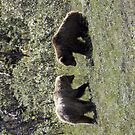 Two grizzly bears by Lisa Kyle Young