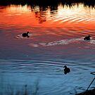 Keysborough Wetlands After Sunset. Victoria, Australia. by Ralph de Zilva