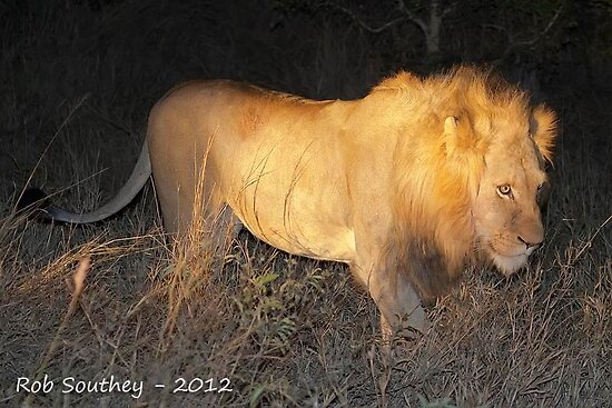King of the Bushveld by Rob  Southey