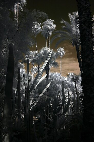 Gardens in Marrakesh Morocco - Infrared by Debbie Pinard