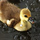 Ducky splashing by bluetaipan
