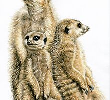 The Meerkats by Nicole Zeug