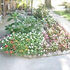 Garden by jesusmyjoy
