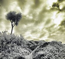 Werribee Mansion - Ext IR Grotto Top by lightsmith