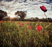 The Poppy Field by Nicola Smith