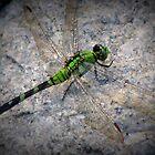 Dragon Friend by peepholephotos