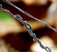 Fencing by trueblvr