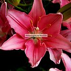 A Lily for Lily Grissom by Michiale