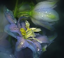 The blue Delphinium by EbyArts