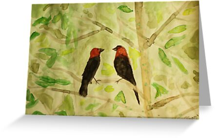 Brown Headed Cowbirds by Thomas Murphy