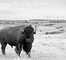 Power of the Prairie by Nate Welk