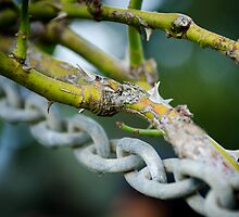 Of Thorns and Chains by Handy Andy Pandy