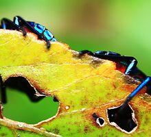 stink bug by NicoleConrau
